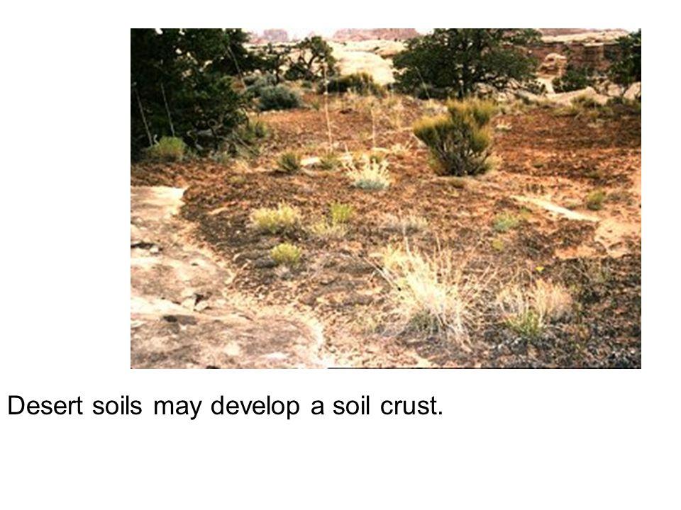 Desert soils may develop a soil crust.