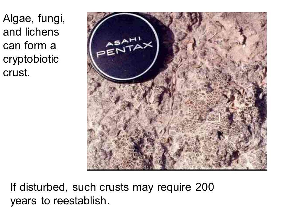 Algae, fungi, and lichens can form a cryptobiotic crust.
