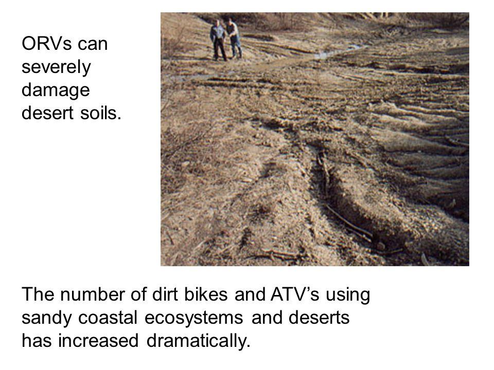 ORVs can severely damage desert soils.