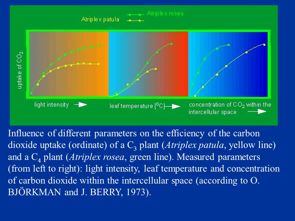 Influence of different parameters on the efficiency of the carbon dioxide uptake (ordinate) of a C 3 plant (Atriplex patula, yellow line) and a C 4 plant (Atriplex rosea, green line).