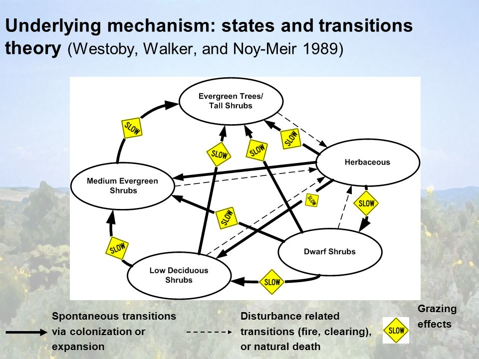 Underlying mechanism: states and transitions theory (Westoby, Walker, and Noy-Meir 1989) Spontaneous transitions via colonization or expansion Disturbance related transitions (fire, clearing), or natural death Grazing effects