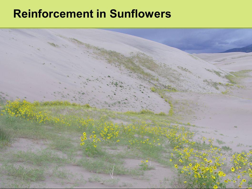 Reinforcement in Sunflowers