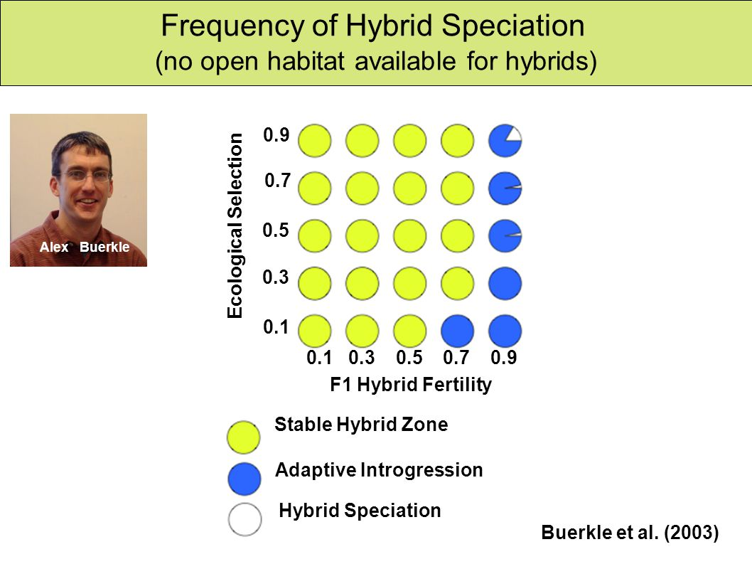 Hybrid speciation Frequency of Hybrid Speciation (no open habitat available for hybrids) 0.9 0.7 0.5 0.3 0.1 0.1 0.3 0.5 0.7 0.9 F1 Hybrid Fertility Ecological Selection Stable Hybrid Zone Adaptive Introgression Hybrid Speciation Buerkle et al.