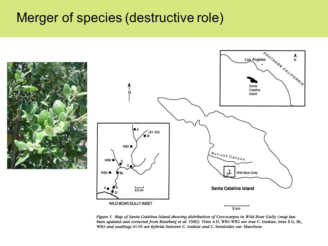 Merger of species (destructive role)