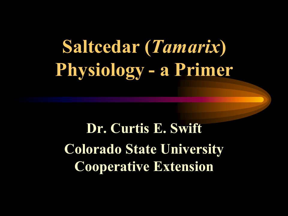 Saltcedar (Tamarix) Physiology - a Primer Dr. Curtis E. Swift Colorado State University Cooperative Extension
