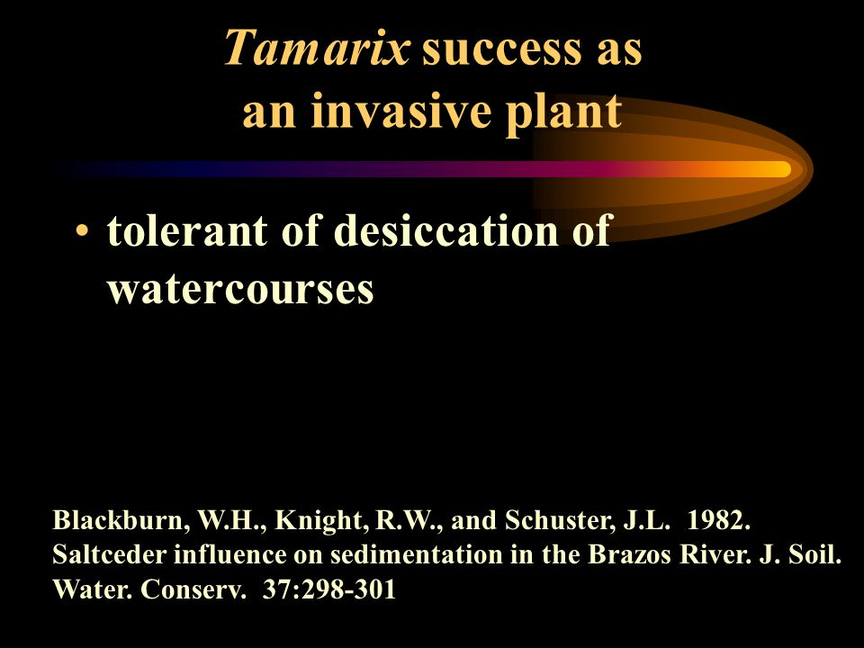 tolerant of desiccation of watercourses Blackburn, W.H., Knight, R.W., and Schuster, J.L. 1982. Saltceder influence on sedimentation in the Brazos Riv