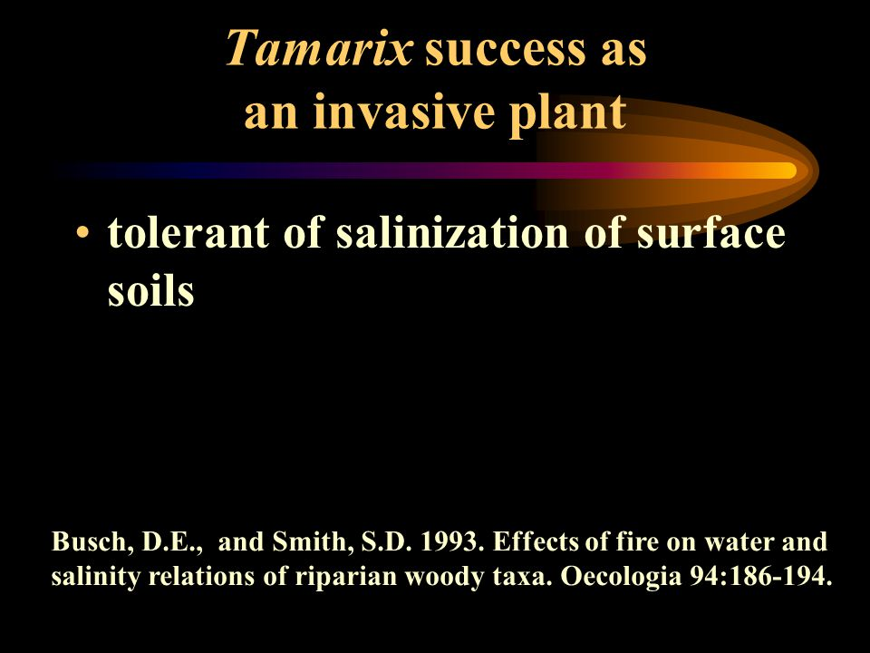 tolerant of salinization of surface soils Busch, D.E., and Smith, S.D. 1993. Effects of fire on water and salinity relations of riparian woody taxa. O