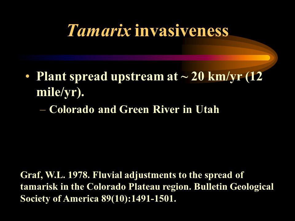 Tamarix invasiveness Plant spread upstream at ~ 20 km/yr (12 mile/yr).