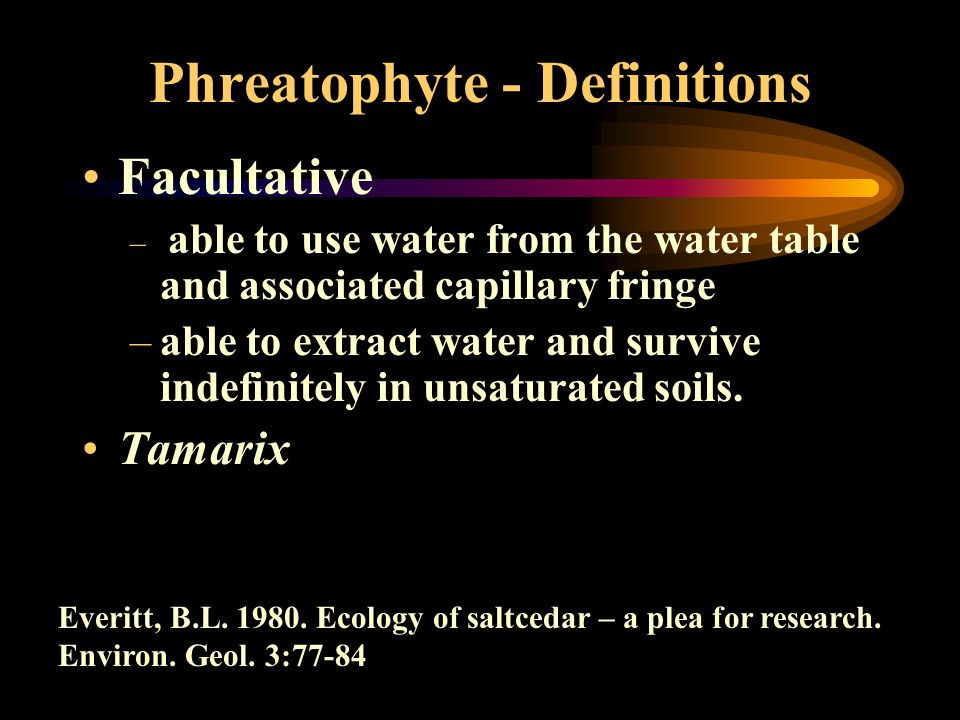 Phreatophyte - Definitions Facultative – able to use water from the water table and associated capillary fringe –able to extract water and survive ind