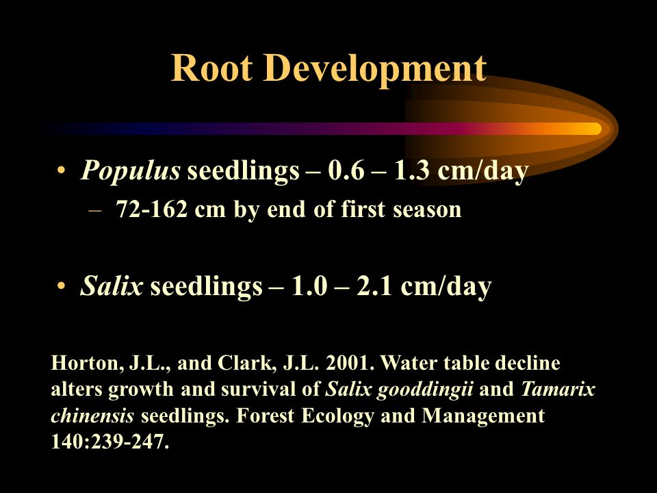 Root Development Populus seedlings – 0.6 – 1.3 cm/day – 72-162 cm by end of first season Salix seedlings – 1.0 – 2.1 cm/day Horton, J.L., and Clark, J.L.