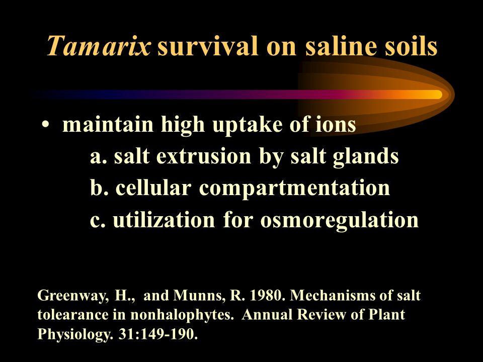 Tamarix survival on saline soils maintain high uptake of ions a. salt extrusion by salt glands b. cellular compartmentation c. utilization for osmoreg
