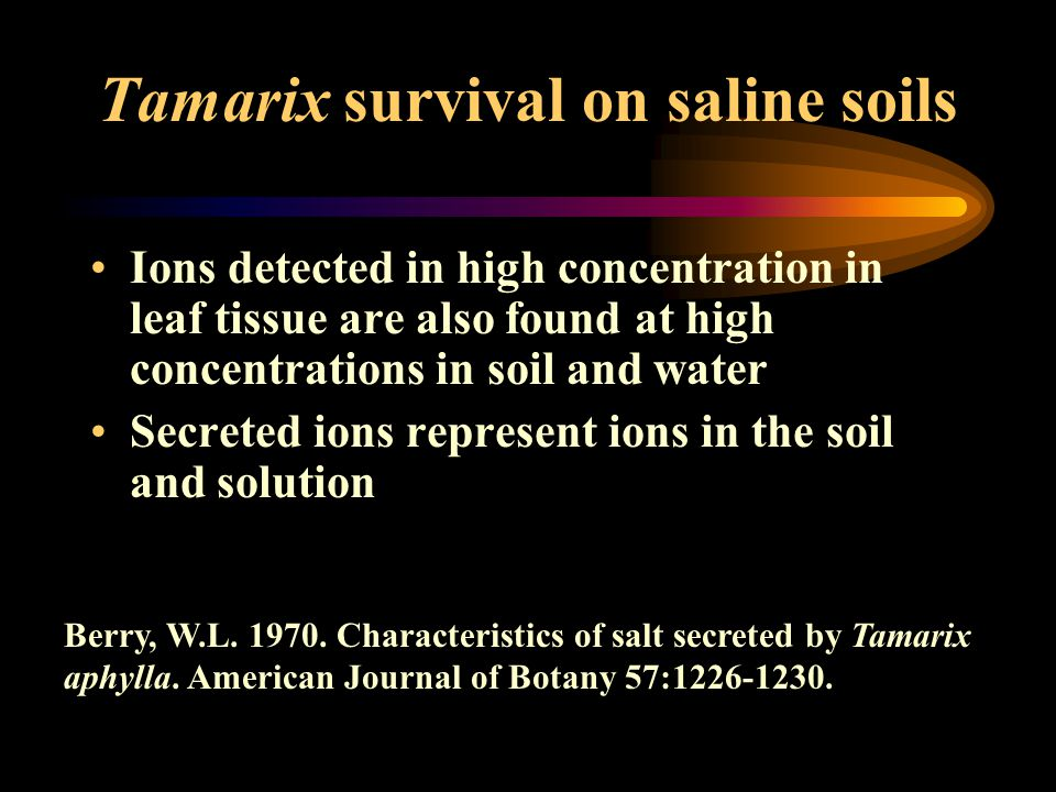 Tamarix survival on saline soils Ions detected in high concentration in leaf tissue are also found at high concentrations in soil and water Secreted ions represent ions in the soil and solution Berry, W.L.