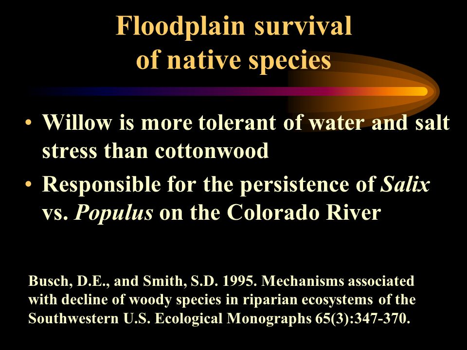 Floodplain survival of native species Willow is more tolerant of water and salt stress than cottonwood Responsible for the persistence of Salix vs. Po