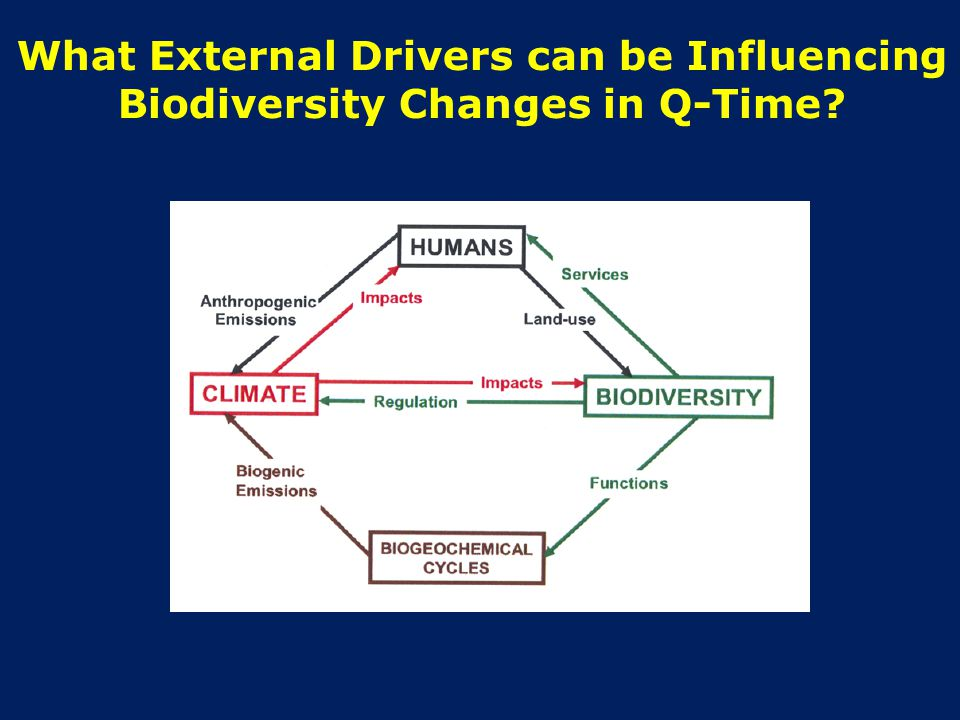What External Drivers can be Influencing Biodiversity Changes in Q-Time