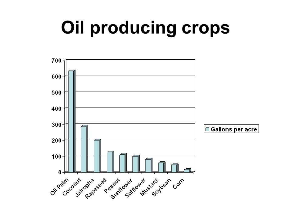 Oil producing crops
