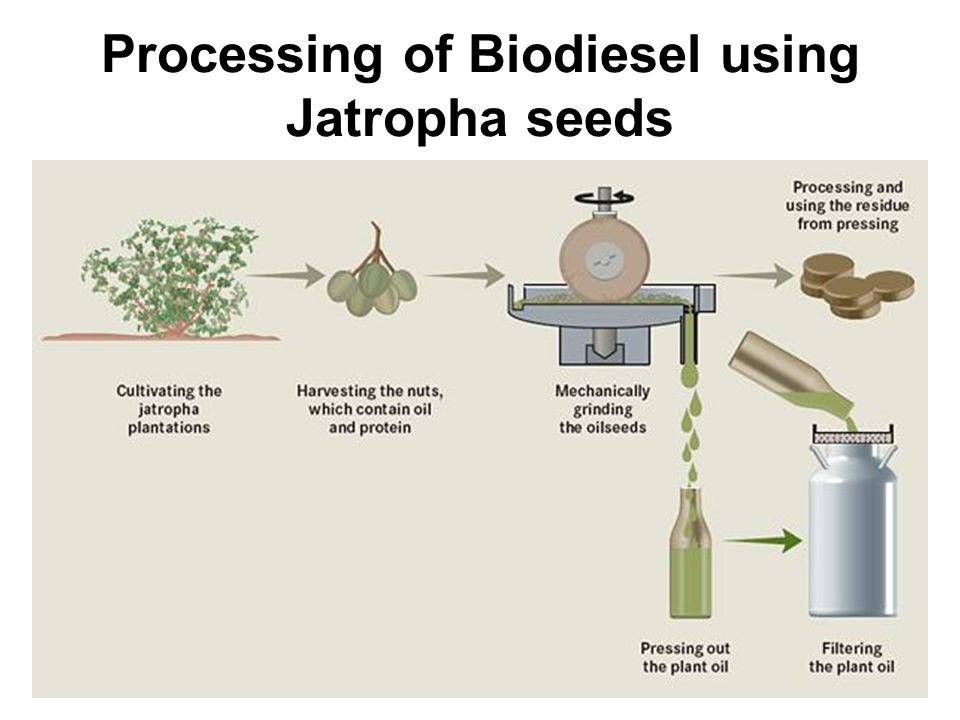 Processing of Biodiesel using Jatropha seeds