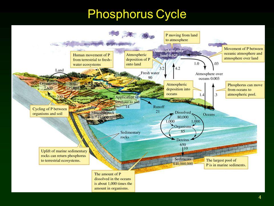 5 Nitrogen Cycle Includes major atmospheric pool - N 2.