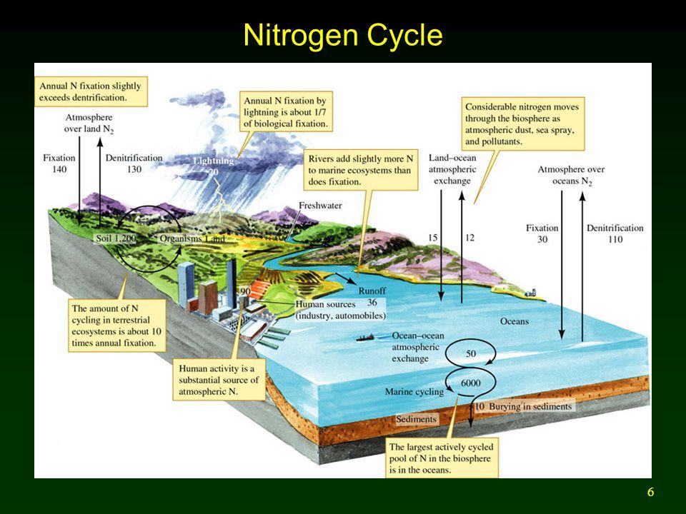 6 Nitrogen Cycle