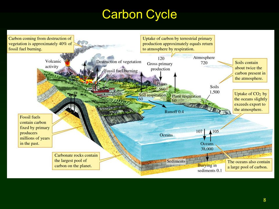 8 Carbon Cycle