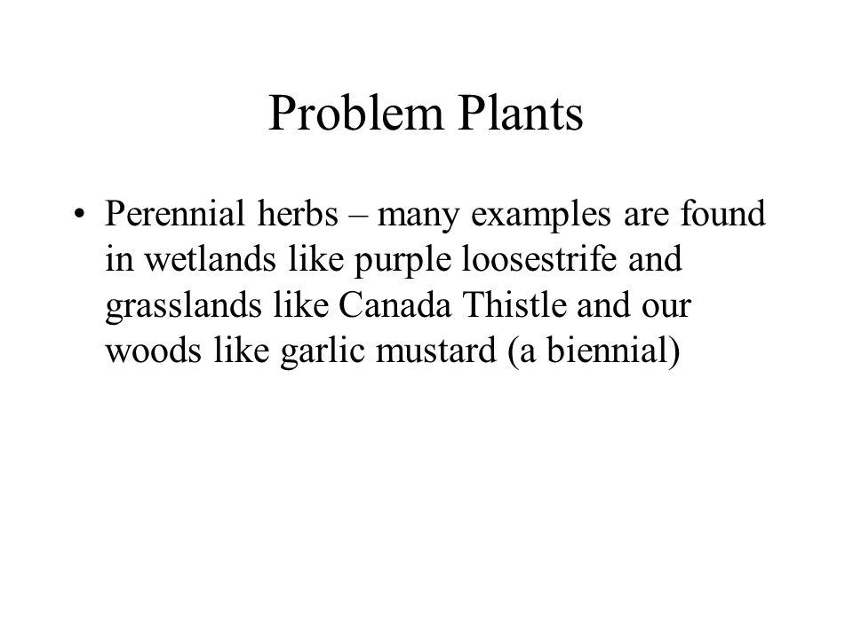 Problem Plants Perennial herbs – many examples are found in wetlands like purple loosestrife and grasslands like Canada Thistle and our woods like gar
