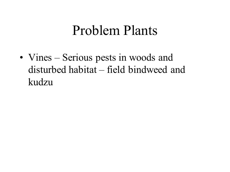 Problem Plants Vines – Serious pests in woods and disturbed habitat – field bindweed and kudzu