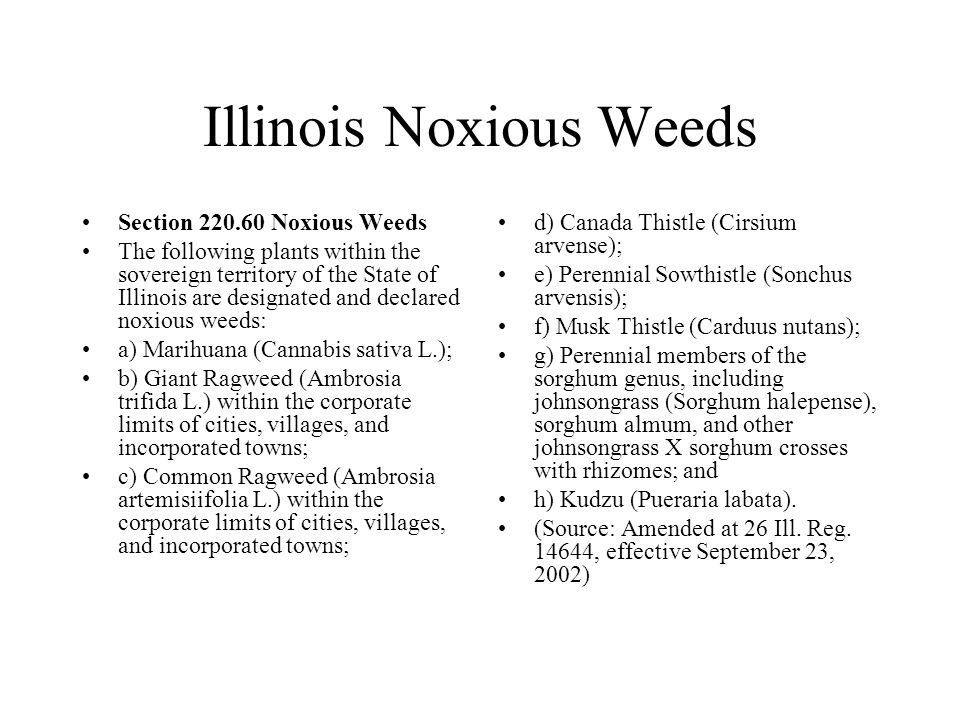 Illinois Noxious Weeds Section 220.60 Noxious Weeds The following plants within the sovereign territory of the State of Illinois are designated and de