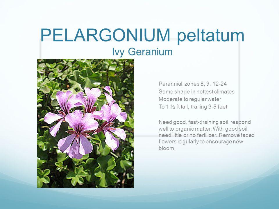 PELARGONIUM peltatum Ivy Geranium Perennial, zones 8, 9. 12-24 Some shade in hottest climates Moderate to regular water To 1 ½ ft tall, trailing 3-5 f