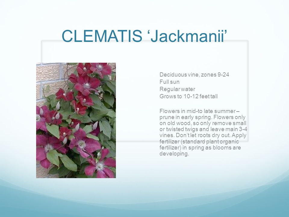 CLEMATIS 'Jackmanii' Deciduous vine, zones 9-24 Full sun Regular water Grows to 10-12 feet tall Flowers in mid-to late summer – prune in early spring.