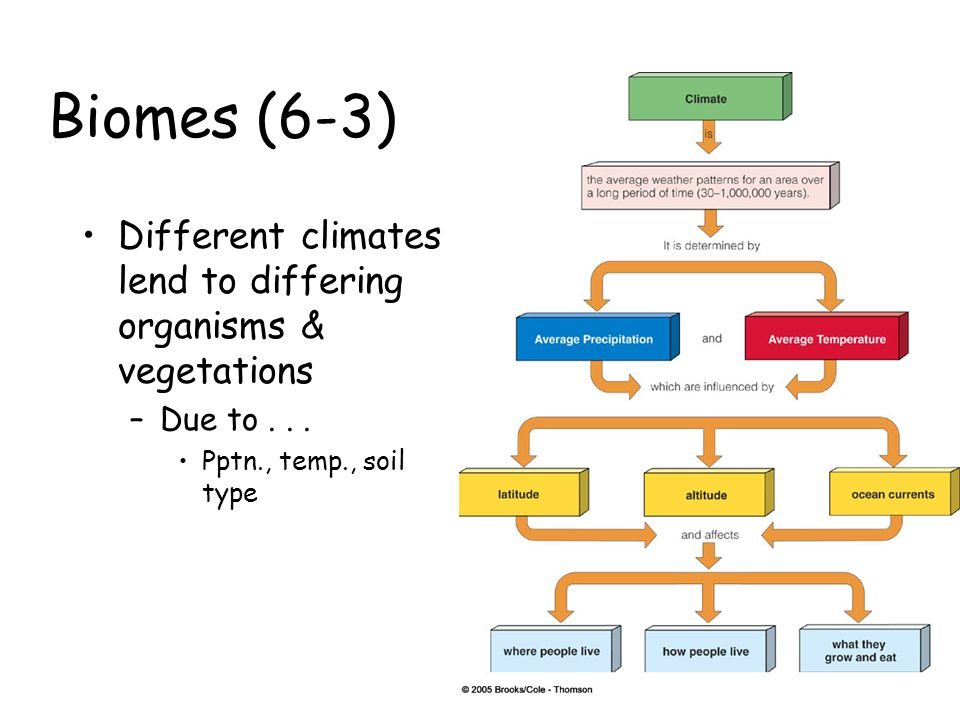 Biomes (6-3) Different climates lend to differing organisms & vegetations –Due to... Pptn., temp., soil type