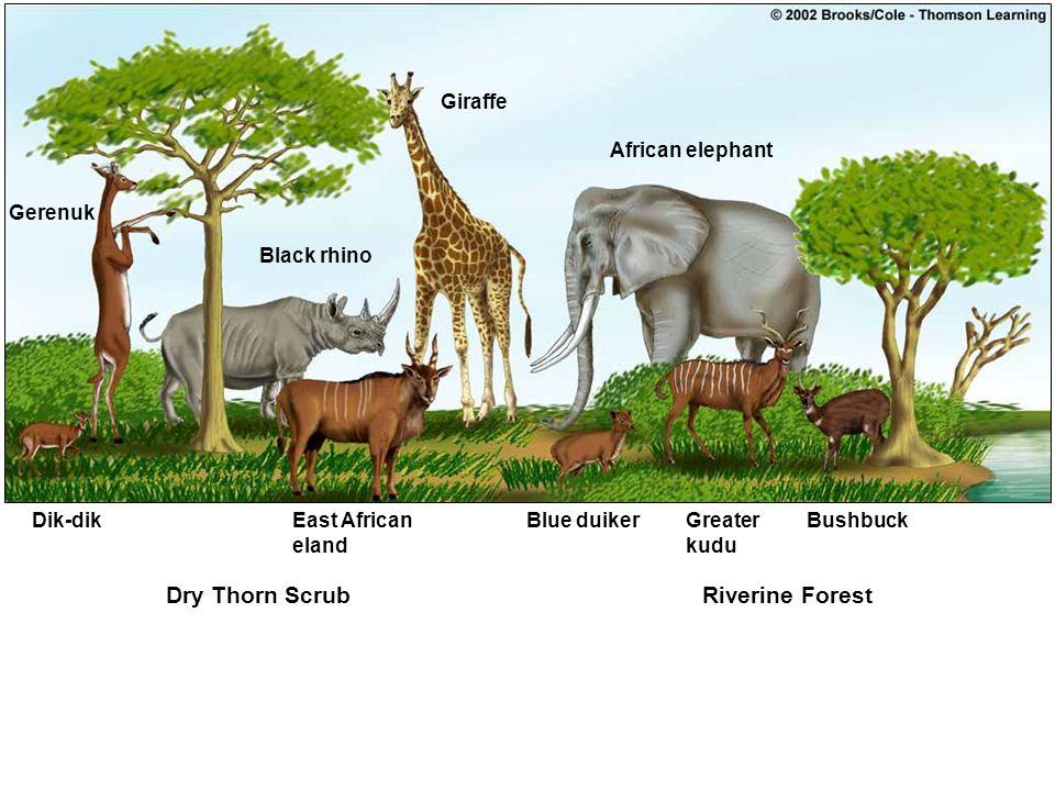 Dry Thorn ScrubRiverine Forest Dik-dikEast African eland Blue duikerGreater kudu Bushbuck Black rhino Giraffe African elephant Gerenuk