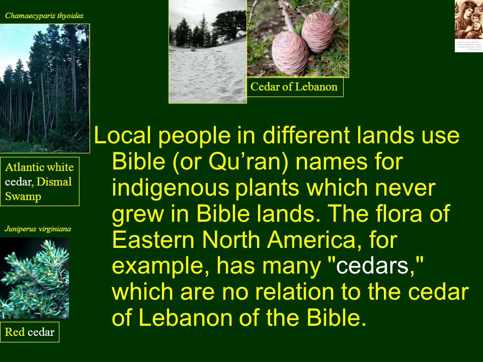 Local people in different lands use Bible (or Qu'ran) names for indigenous plants which never grew in Bible lands.
