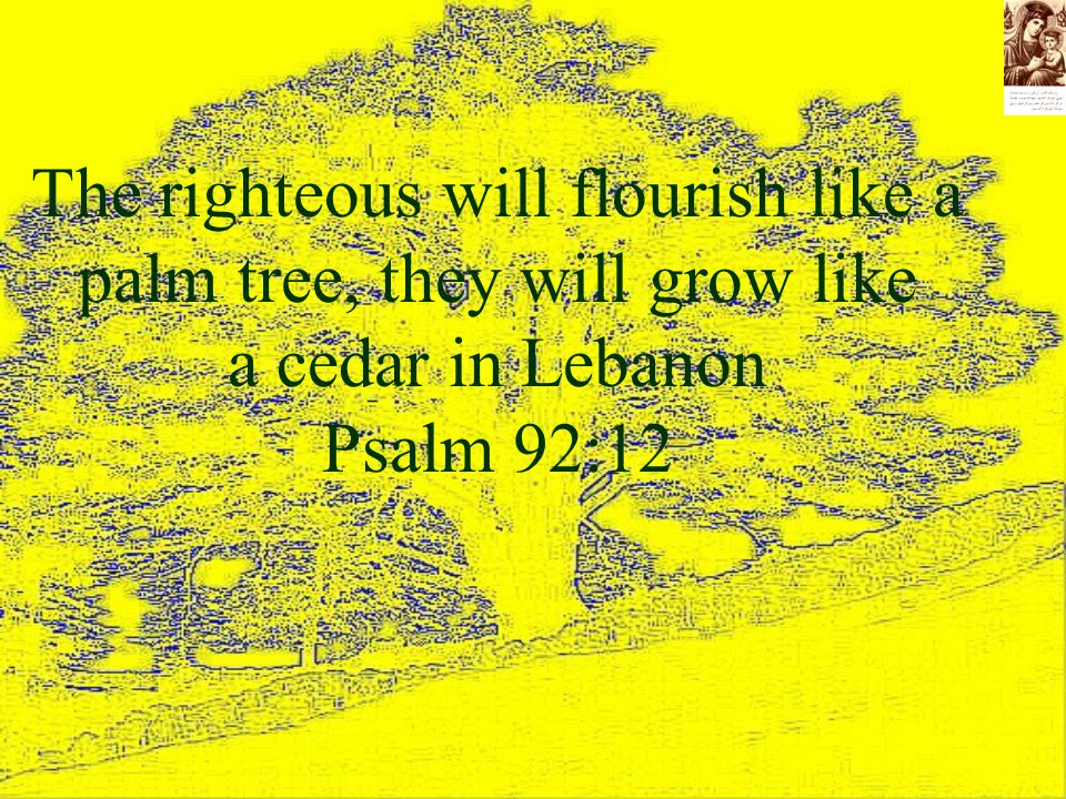 The righteous will flourish like a palm tree, they will grow like a cedar in Lebanon Psalm 92:12