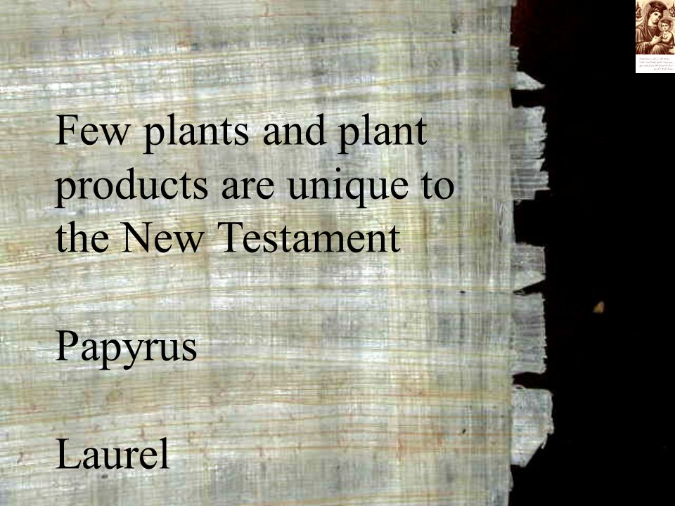 Few plants and plant products are unique to the New Testament Papyrus Laurel