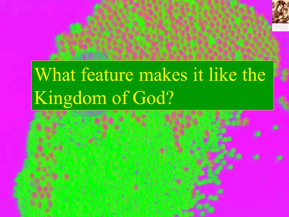 What feature makes it like the Kingdom of God