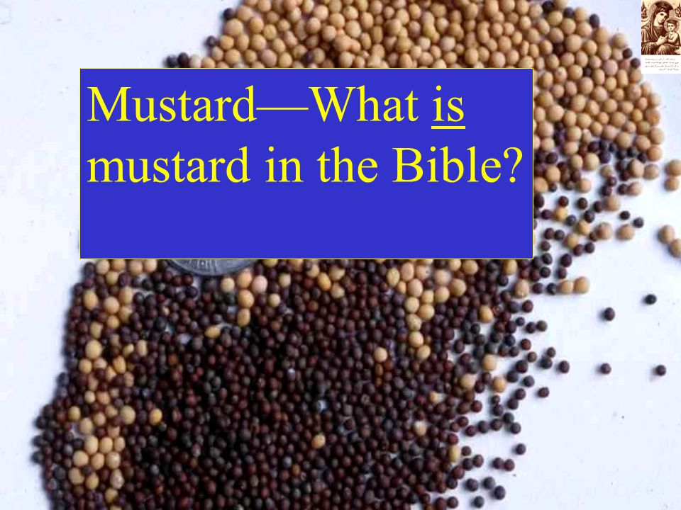 Mustard—What is mustard in the Bible