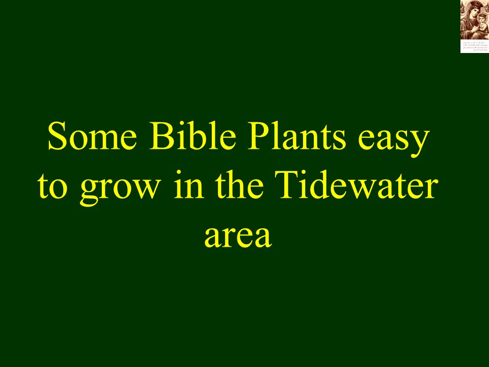 Some Bible Plants easy to grow in the Tidewater area