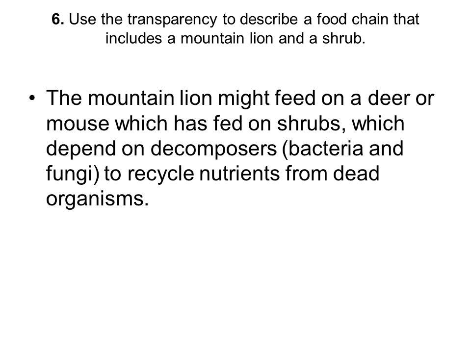 6. Use the transparency to describe a food chain that includes a mountain lion and a shrub. The mountain lion might feed on a deer or mouse which has