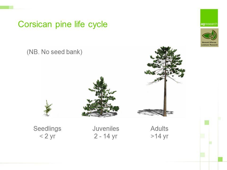 (NB. No seed bank) Seedlings < 2 yr Juveniles 2 - 14 yr Adults >14 yr Corsican pine life cycle