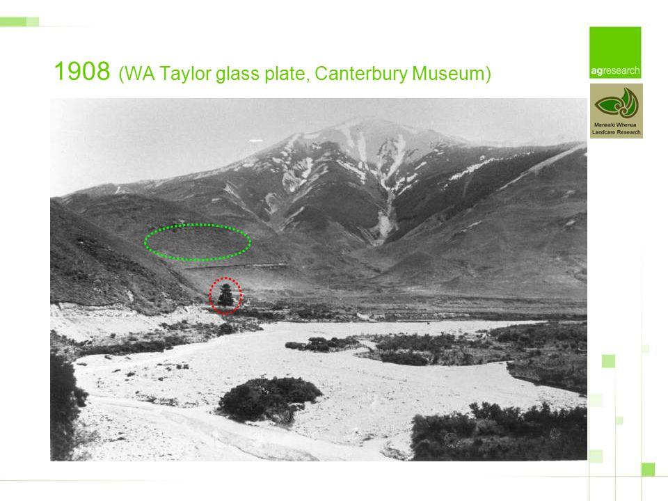 1908 (WA Taylor glass plate, Canterbury Museum)