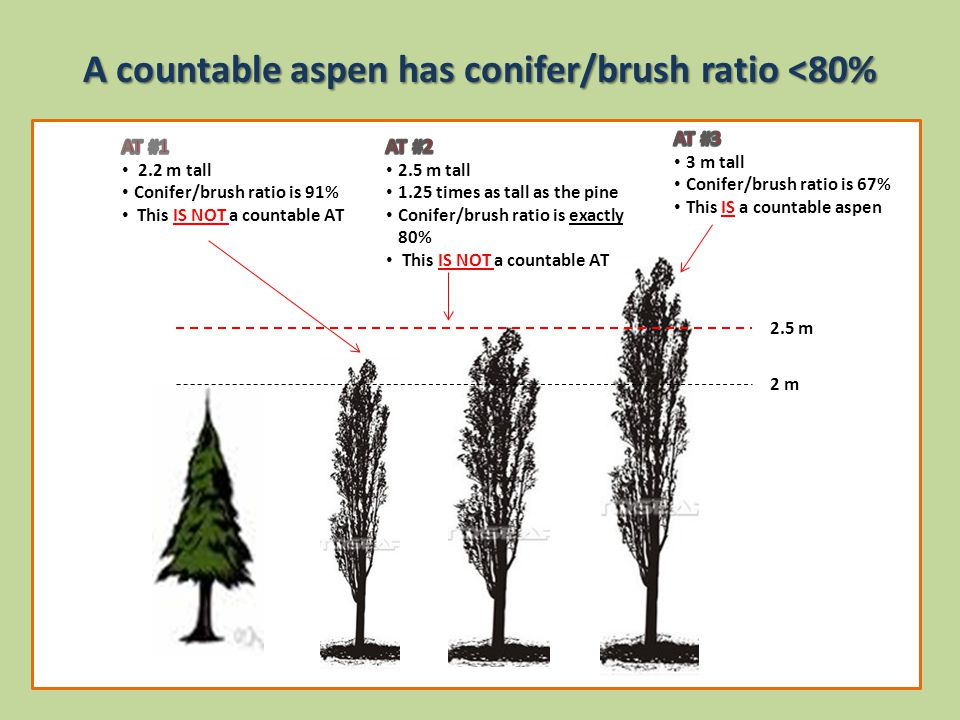 A countable aspen has conifer/brush ratio <80% 2 m 2.5 m