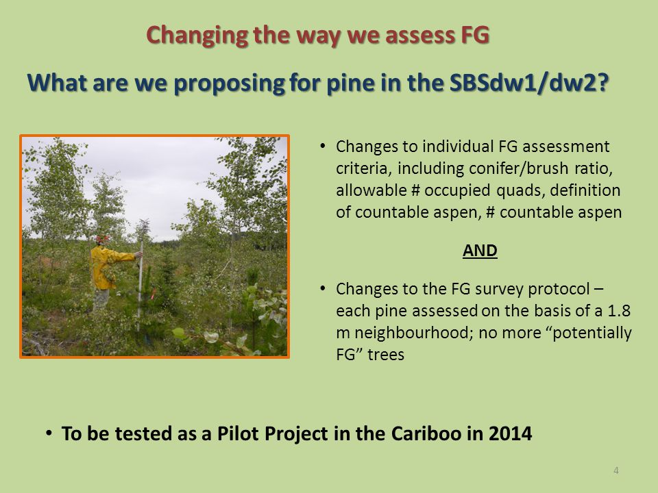 Changing the way we assess FG What are we proposing for pine in the SBSdw1/dw2.