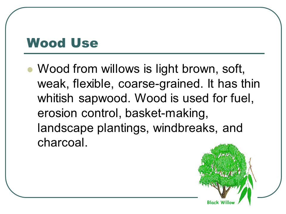 Wood Use Wood from willows is light brown, soft, weak, flexible, coarse-grained.