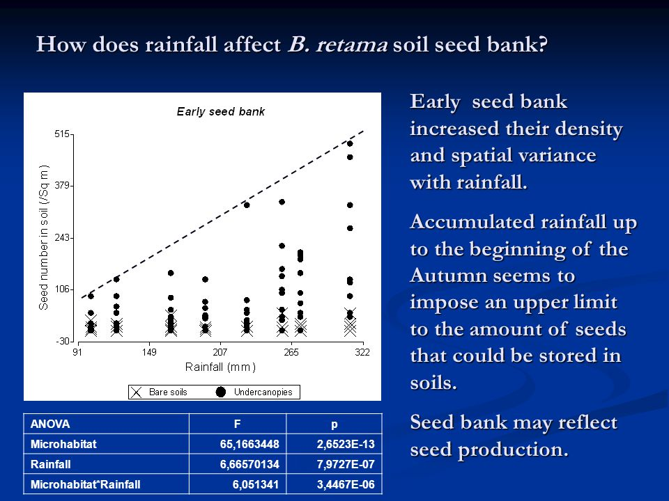 How does rainfall affect B. retama soil seed bank.