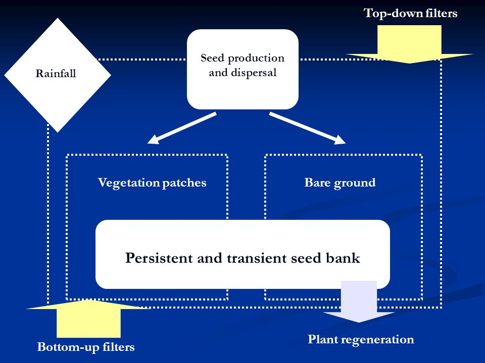 Seed production and dispersal Vegetation patchesBare ground Rainfall Persistent and transient seed bank Bottom-up filters Top-down filters Plant regeneration
