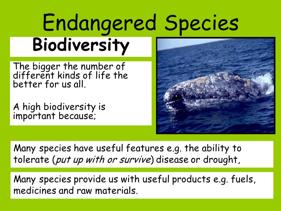 Biodiversity The bigger the number of different kinds of life the better for us all.