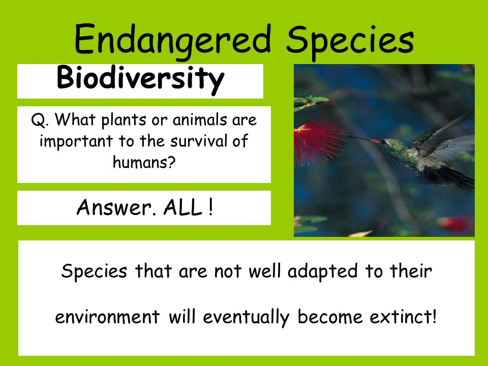 Endangered Species Biodiversity Q. What plants or animals are important to the survival of humans.