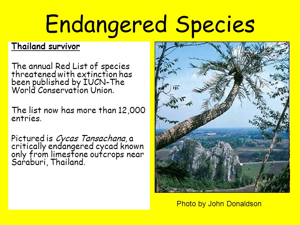 Thailand survivor The annual Red List of species threatened with extinction has been published by IUCN-The World Conservation Union.