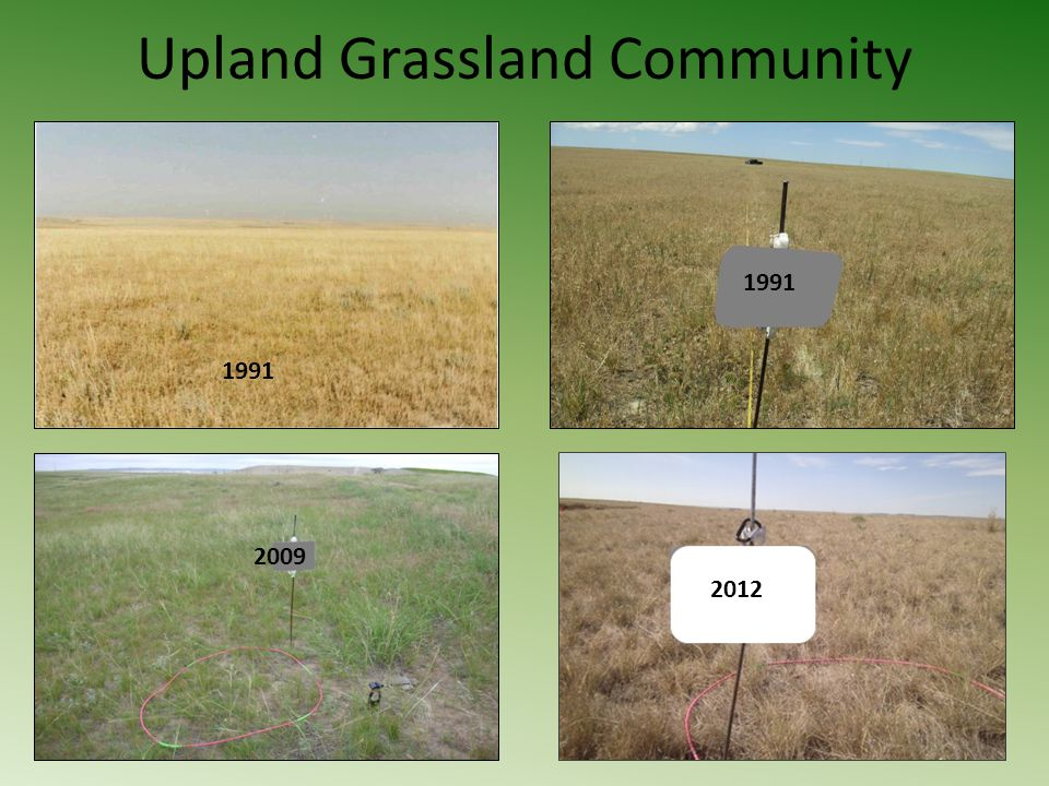 Upland Grassland Community 1991 2009 2012