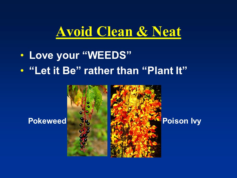 Avoid Clean & Neat Love your WEEDS Let it Be rather than Plant It Pokeweed Poison Ivy