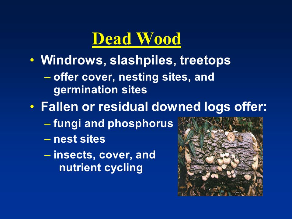 Dead Wood Windrows, slashpiles, treetops –offer cover, nesting sites, and germination sites Fallen or residual downed logs offer: –fungi and phosphorus –nest sites –insects, cover, and nutrient cycling